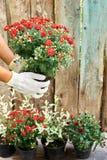 Fille plantant des fleurs en été Photo libre de droits