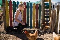 Fille regardant la poule dans la ferme Photographie stock