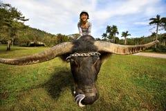Fille sur des yaks Photos libres de droits