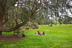 Fille sur l'herbe avec l'ordinateur portatif images libres de droits