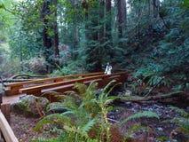 Fille sur la promenade en Muir Woods National Monument photos libres de droits