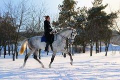 Fille sur le cheval de dressage en hiver Image libre de droits