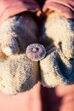 Fille tenant les coquilles congelées de mer Photos stock