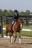 Fille trottant sur le cheval de châtaigne Photos libres de droits