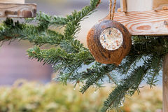 Filled Coconut Shell suet treats made of fat, sunflower seeds ha. Nging at bird feeder decorated with pine tree branches during winter in Europe Stock Images