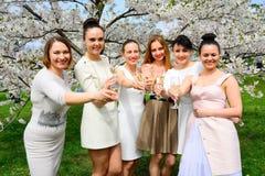 Filles avec le champagne célébrant dans le jardin de Sakura Photographie stock libre de droits