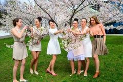 Filles avec le champagne célébrant dans le sakura& x27 ; jardin de s Photos stock