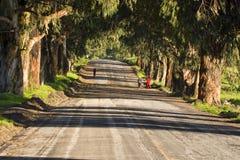 Filles courant à une route de campagne Photographie stock