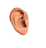 Filles d'oreille en isolation Image libre de droits