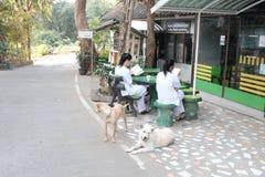 Filles dans le camp Chiang Mai Thailand de méditation photo libre de droits