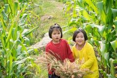 Filles dans le champ de maïs Photos stock