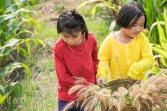 Filles dans le champ de maïs Photo libre de droits