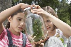 Filles examinant des insectes de bâton dans le pot Images stock