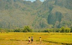 Filles marchant dans un riz Paddy Field Photo stock