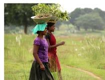 Filles occupées dans la plantation Photographie stock libre de droits