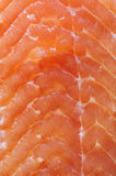 Fillet of red fish a salmon Royalty Free Stock Photos