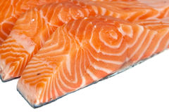 Fillet of salmon Stock Image