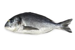 Fillet of salmon, isolated Stock Image