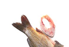 Fillet and tail of fresh raw fish carp. Whole background Royalty Free Stock Photography