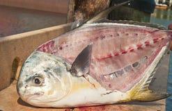 Filleted 12 рыбам разрешения фунта Стоковая Фотография
