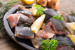 Filleted carp Stock Images