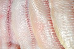 Filleted catfish. Closeup filleted catfish for background uses Royalty Free Stock Photo