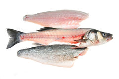 Filleted fish and fillets. Isolated on white Stock Images
