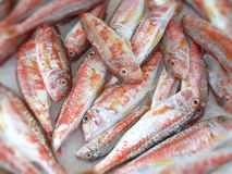 Filleted Mullet fish Royalty Free Stock Images