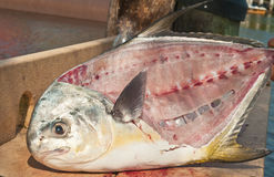 Filleted twelve pound permit fish. On a  public cleaning station at a tropical habor on the Gulf of Mexico Stock Photography