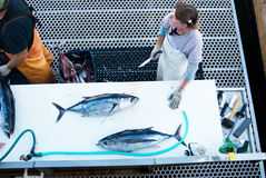 filleting туна Стоковые Фото