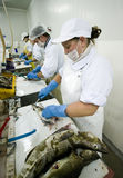 Filleting cod Stock Photo