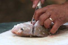 Filleting Fish Stock Image
