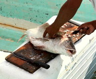 Filleting Fish. A fish being filleted by a fisherman stock photos