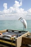 Filleting a fish as egret watches stock photography
