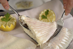 Filleting a poached turbot Royalty Free Stock Photo