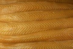 fillets сырцовые семги Стоковое Изображение RF