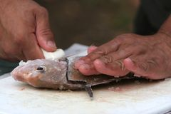 Filletting Fische stockfotos