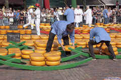 Filling barrows at cheese market in Alkmaar, Holla Stock Photos