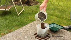 Filling a Bird Feeder stock video footage