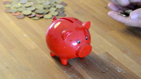 Filling red money pig Stock Photo