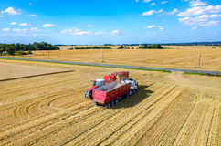 Filling the truck with wheat seeds Royalty Free Stock Photo
