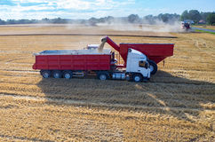 Filling the truck with wheat seeds Royalty Free Stock Photos