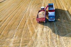 Filling the truck with wheat seeds Stock Image