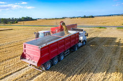 Filling the truck with wheat seeds Stock Photos