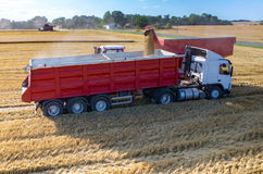 Filling the truck with wheat seeds Royalty Free Stock Image