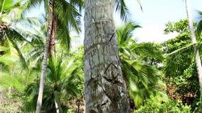 A filmé un palmier de bas en haut banque de vidéos