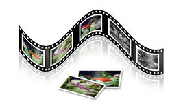 Film. With photos of small fishes Royalty Free Stock Photo