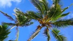 Film av den karibiska sikten för låg vinkel för palmträd arkivfilmer