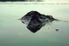 Film bildete sich auf der Oberfläche des Wassers wegen der Algenblüte Stockfotos
