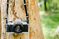 Film camera hanging on a tree Royalty Free Stock Images